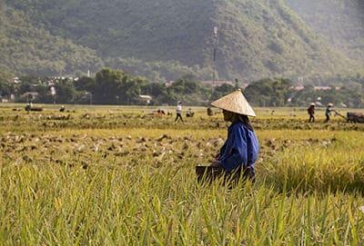 Mai Chau in de oogst tijd