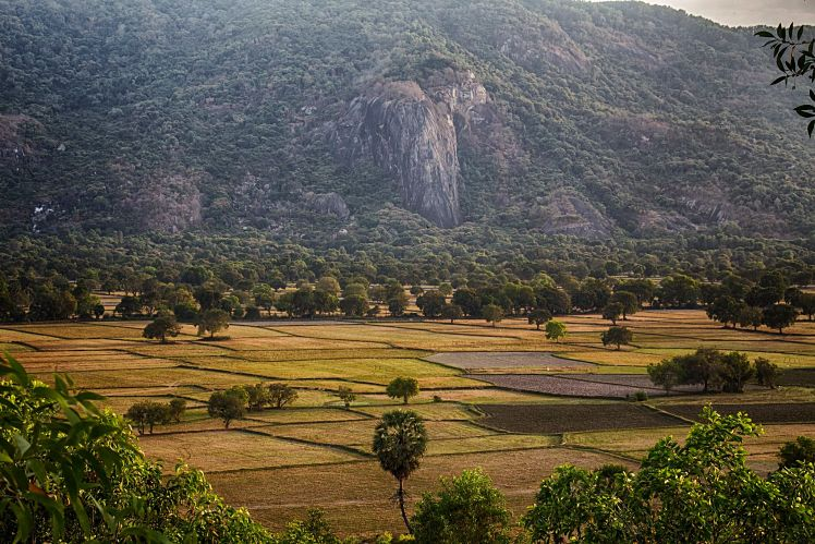 Rijstvelden in de provincie An Giang, Mekong Delta