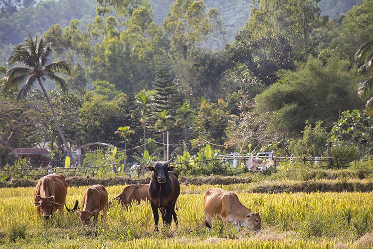 Het landschap in Centraal Vietnam