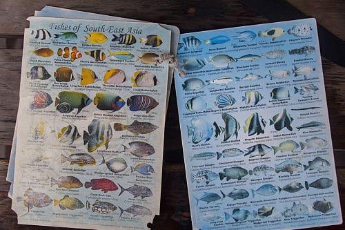 Vissen die je kunt zien tijdens het snorkelen in Vietnam