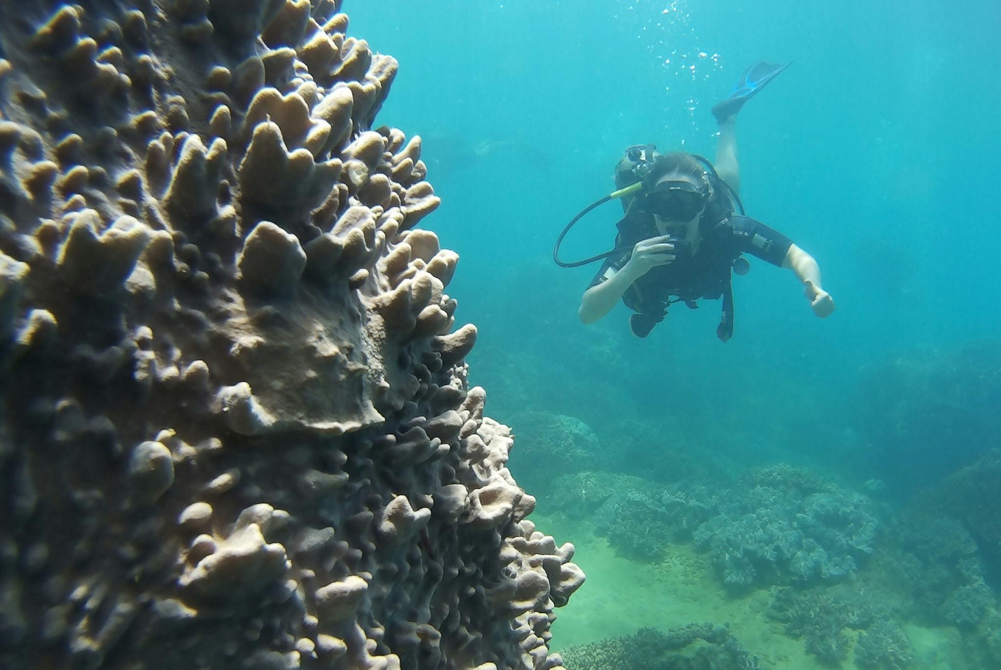 duiken bij de cham eilanden