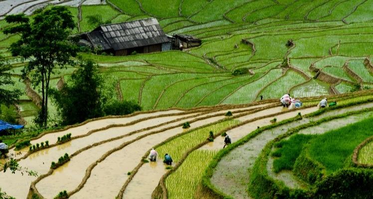 het landschap van de lao cai provincie
